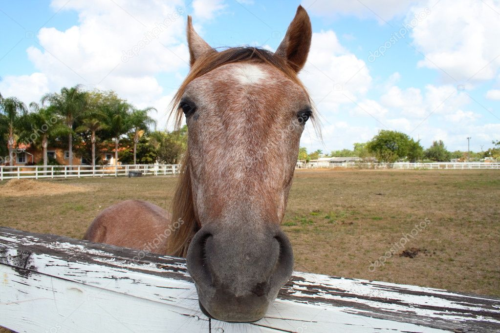 Closeup of horse face leaning against a corral fence — Stock Photo #9298534