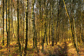 Forest in the autumn (fall) — Stock Photo