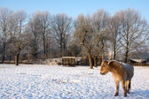 Brown horse in the snow — Stockfoto