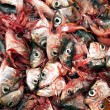 Decapitated sardines - ストック写真