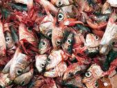 Sardine decapitati — Foto Stock