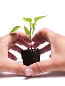 Conservação ambiental — Foto Stock