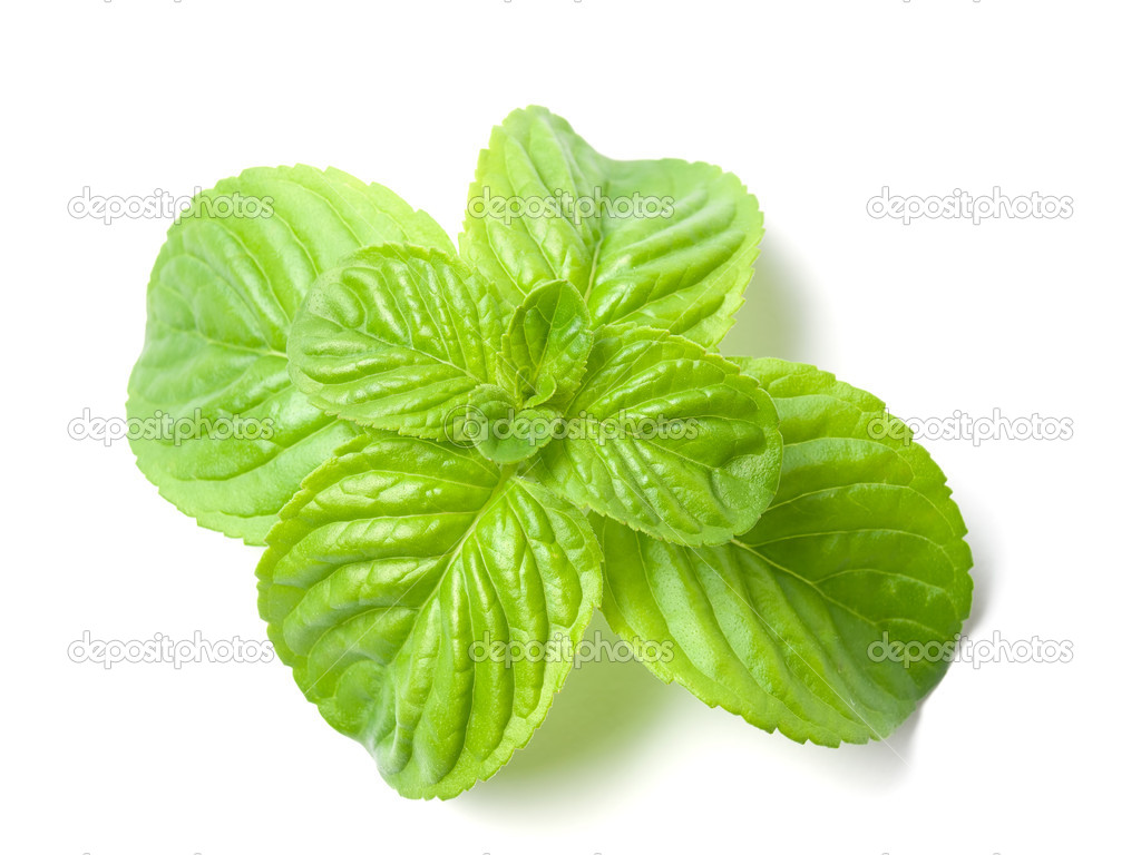 Closeup of Mint leaves on a white background.  Stock Photo #10719187