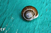 Snail shell on a wood green turquoise board — Stock Photo