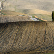 Crete Senesi - Stock Photo