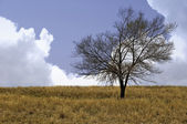 Lone Tree in the Spring — Stock Photo