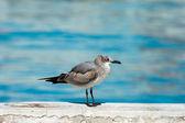 Seagull — Stock fotografie
