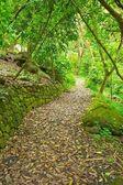 Path Through Lush Green Trees — Stock Photo