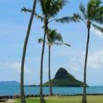 Постер, плакат: Palm Trees and Ocean Off the Coast of Oahu Hawaii