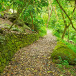 Path Through Lush Green Trees - Stock Photo