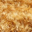 Stock Photo: Swirling Grain Stalks