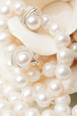 Weiße perle — Stockfoto