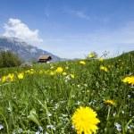 paisaje de primavera en las montañas, las minas terrestres antipersonal — Foto de Stock