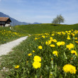 Alps spring — Stock Photo