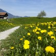 Alps spring — Stock Photo #8830985