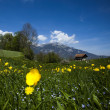Foto Stock: Spring landscape in mountains, apls