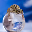 Globe in gecko — Stockfoto