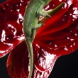 Flower on chameleon — Stock Photo #8839240