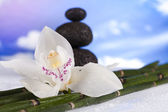 Still life, with orchid flower, zen — Stock Photo