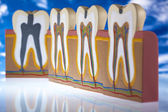 Tooth — Stock Photo