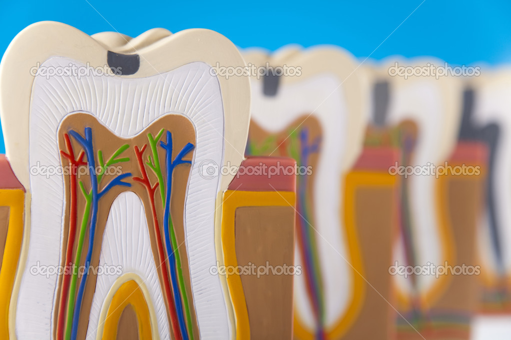 Dental — Stock Photo #9916601