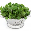 Watercress — Stock Photo #10538026