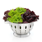 Tricolour Lettuce — Stock Photo