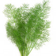 Dill Herb Leaf Sprig - Stock Photo