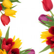 Tulip Flower Border — Stock Photo