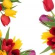 Tulip Flower Border — Stock Photo #8510377