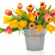 Tulip Beauties — Stock Photo