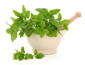 Oregano Herb — Stock Photo