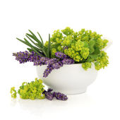 Lavender and Ladies Mantle Flowers — Stock Photo