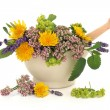 Herb Flower Selection - Stock Photo