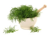 Fennel Herb — Stock Photo