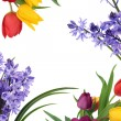 Spring Flower Border — Stock Photo