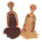 Mustard Seed — Stock Photo