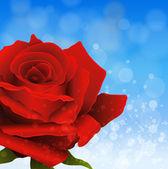 Fondo con rose — Vector de stock