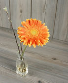 Beautiful orange gerbera — Stock Photo