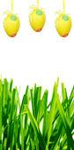 Uova di pasqua e di erba verde — Foto Stock
