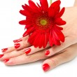 Woman hands with red manicure and red flower — Stock Photo #10261817