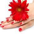 Woman hands with red manicure and red flower — Stock Photo