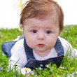 Baby on green grass with daisy — Stock Photo