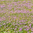 Lilac flowery meadow — Photo