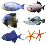 Tropiska värld av fisk del 2 isolerade på vit — Stockfoto