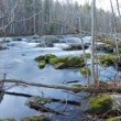 Wild river in the woodlands of south east Sweden. — Stock Photo