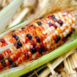 Fresh Decorative Indian Corn — Stock Photo #10512238