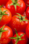 Tomat bakgrund — Stockfoto