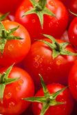 Tomato background — Stock Photo