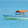 Boat in Zanzibar — Stock Photo